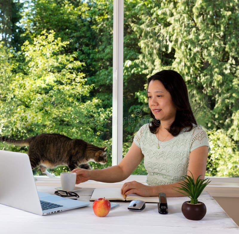 Donna che lavora a casa con la finestra ed il gatto di luce del giorno dietro lei fotografie stock libere da diritti