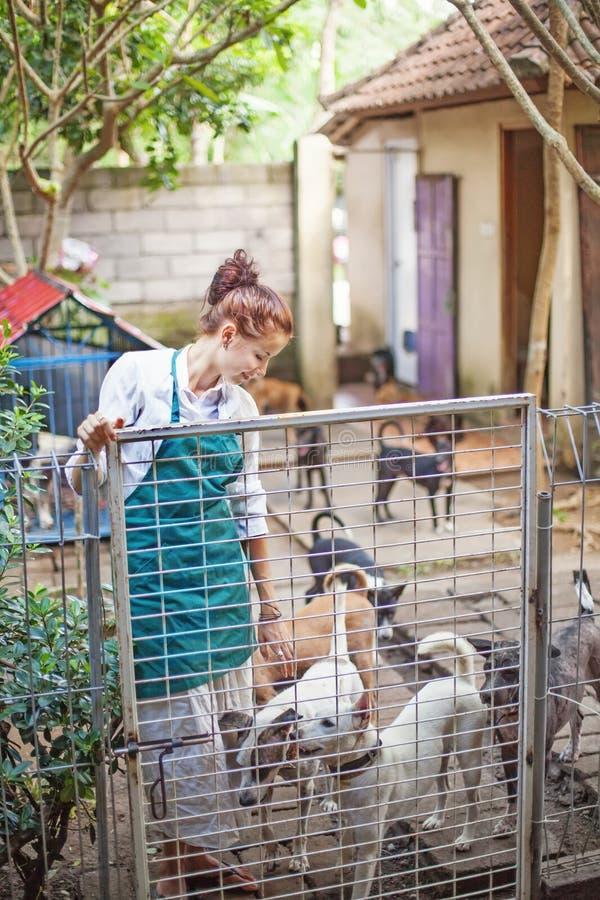 Donna che lavora nel riparo animale immagini stock libere da diritti