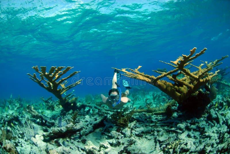 Donna che naviga usando una presa d'aria nella destinazione tropicale fotografia stock libera da diritti
