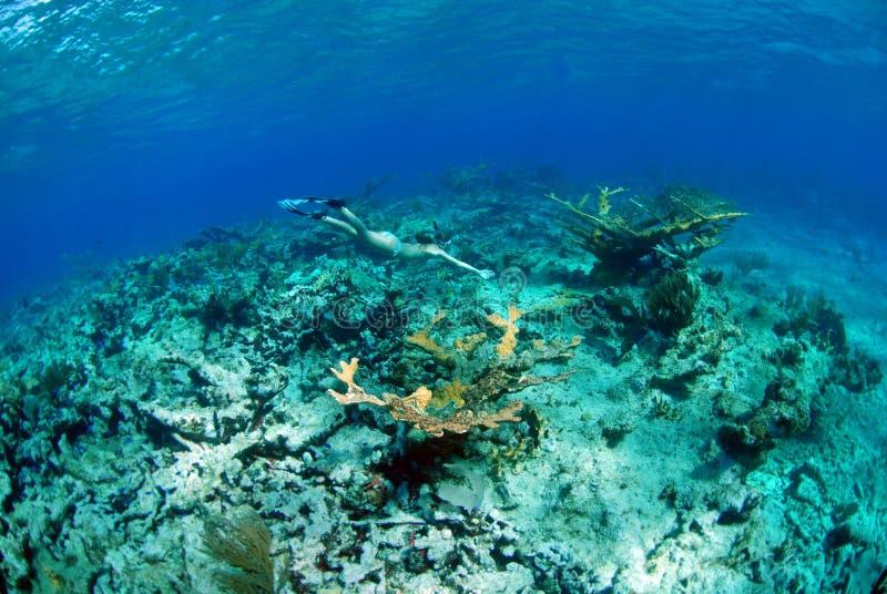 Donna che naviga usando una presa d'aria sulla barriera corallina immagine stock