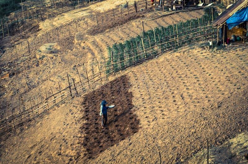 Donna che pianta, Laos immagine stock