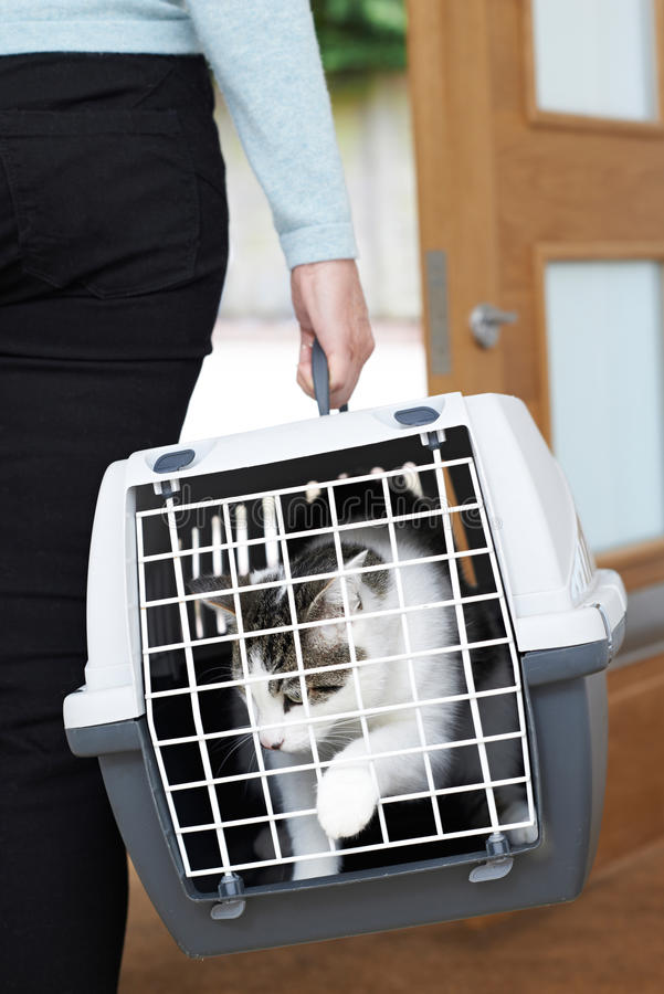 Donna che prende animale domestico Cat To Vet In Carrier immagini stock