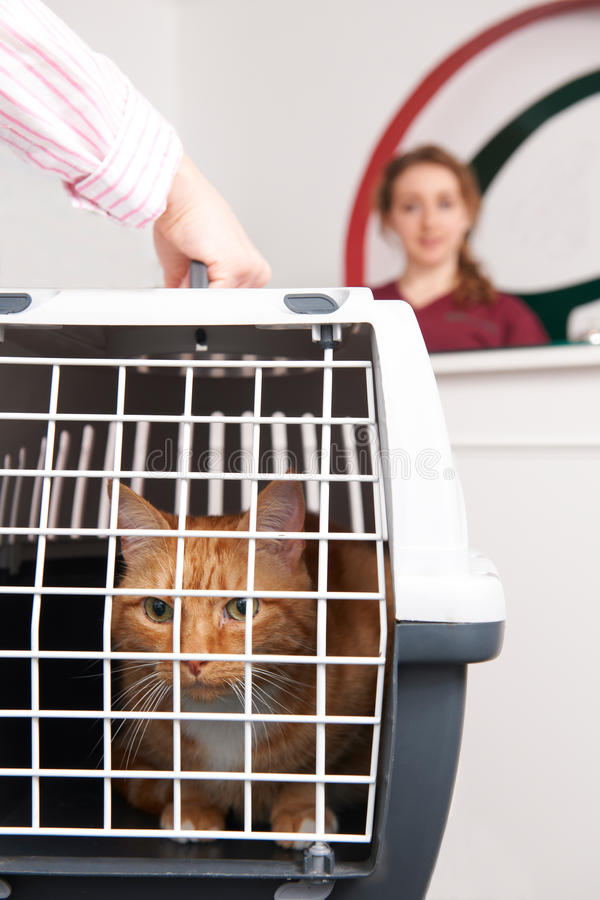 Donna che prende Cat To Vet In Carrier immagine stock libera da diritti