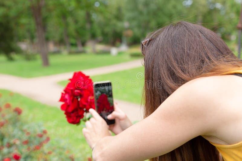 Donna che prende immagine della rosa in parco con il suo cellulare immagini stock