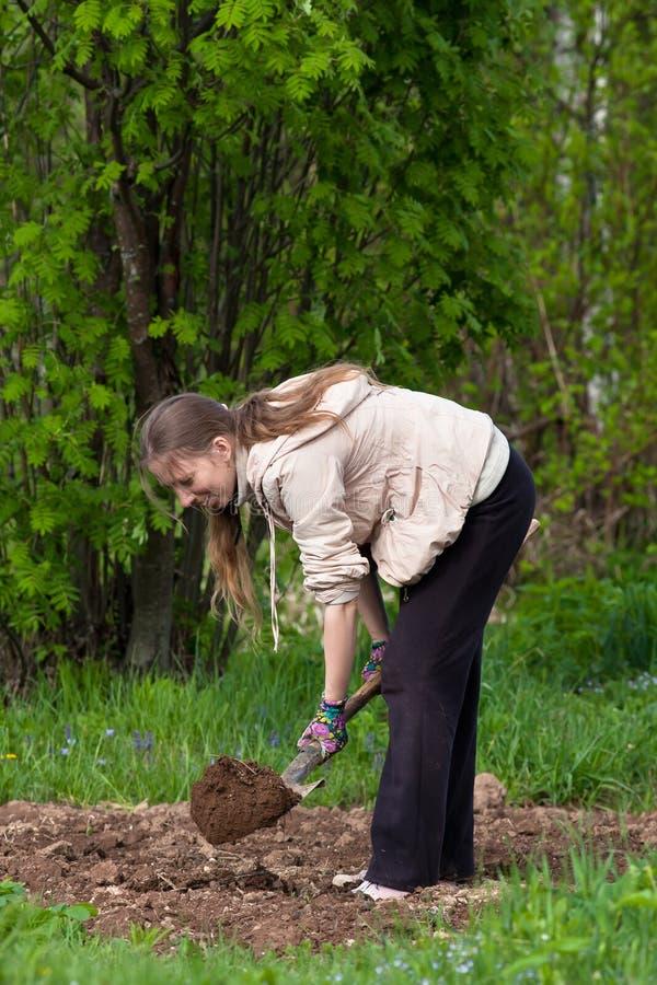 Donna che scava nell'orto immagini stock