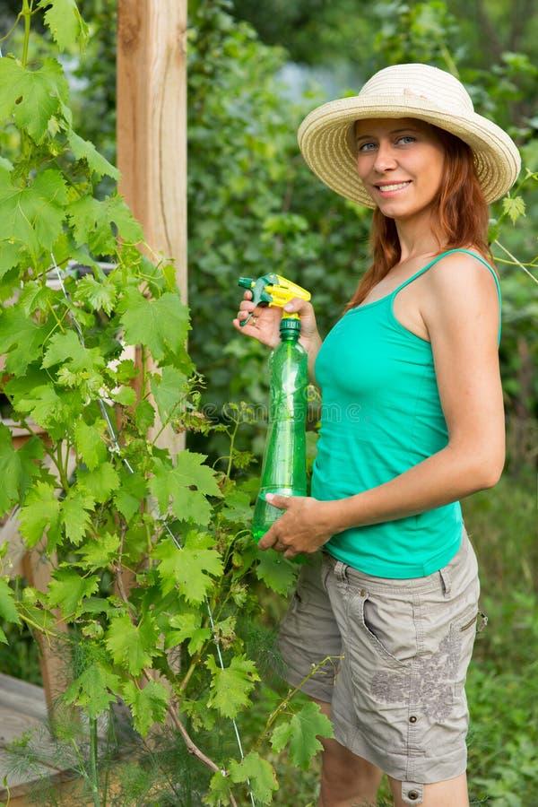 Donna che schizza la soluzione dell'uva fotografie stock libere da diritti