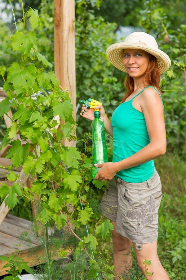 Donna che schizza la soluzione dell'uva fotografia stock libera da diritti