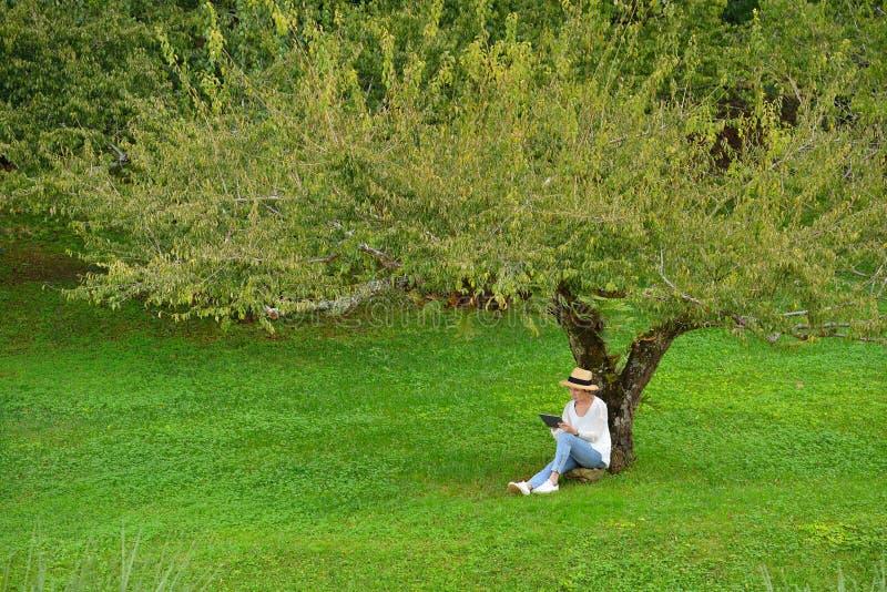 Donna che si siede sotto un albero facendo uso del computer della compressa fotografia stock