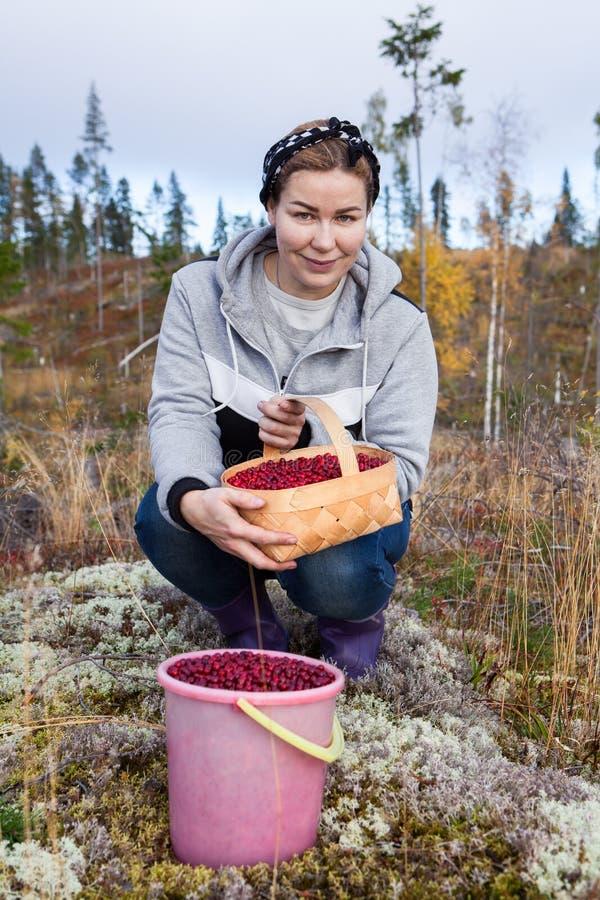 Donna che si siedono nella foresta di autunno con un canestro e un secchio in pieno dei lingonberries maturi fotografia stock