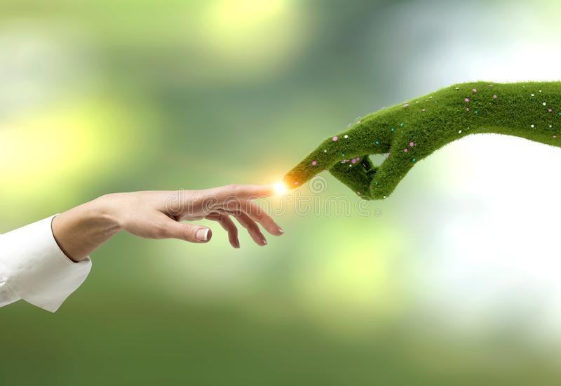 Donna che tocca la mano di erba, verde immagini stock libere da diritti