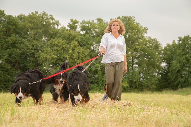 Donna con i cani immagini stock