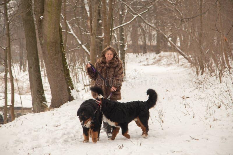Donna con i cani fotografie stock