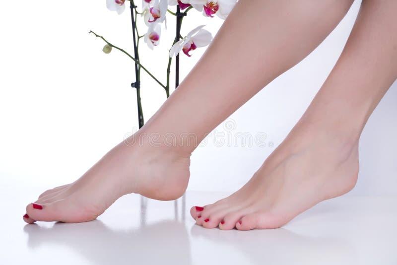 Donna con il pedicure rosso sui piedi e delicatamente sulle gambe su fondo bianco con l'orchidea Stazione termale del piede e di  immagini stock