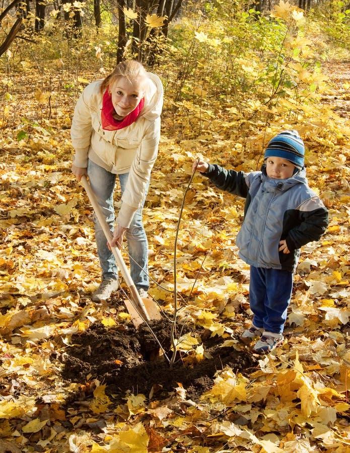 Donna con l'albero della regolazione del preschooler in autunno fotografie stock libere da diritti