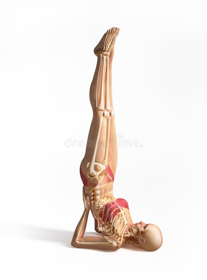 Donna con lo scheletro sovrapposto. immagine stock libera da diritti