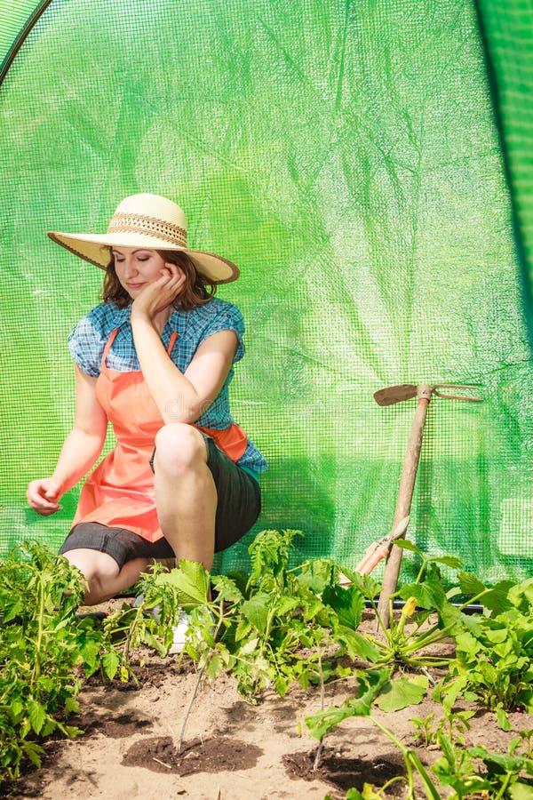 Donna con lo strumento di giardinaggio che funziona nella serra fotografia stock