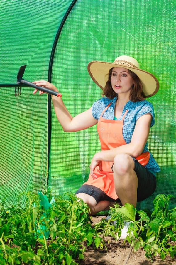 Donna con lo strumento di giardinaggio che funziona nella serra immagine stock libera da diritti