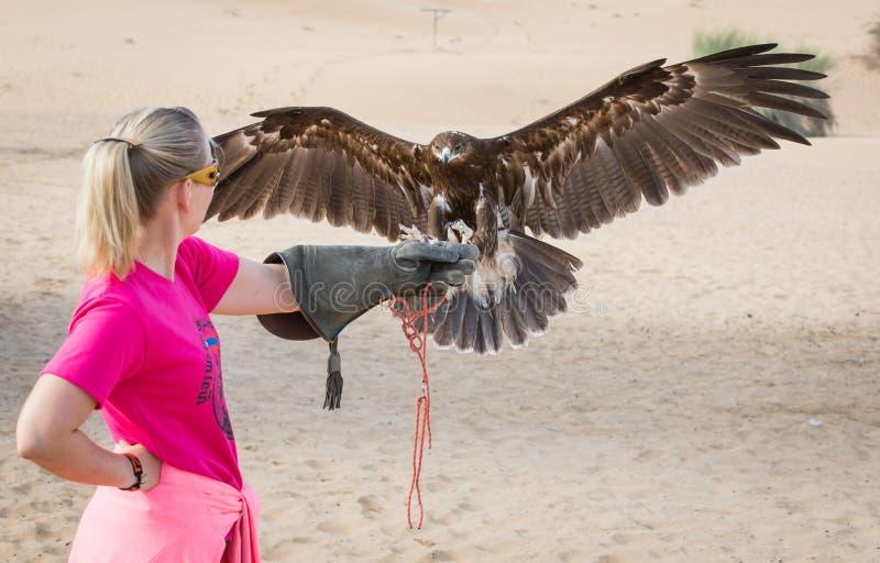Donna con maggior atterraggio macchiato dell'aquila sul suo braccio fotografia stock libera da diritti