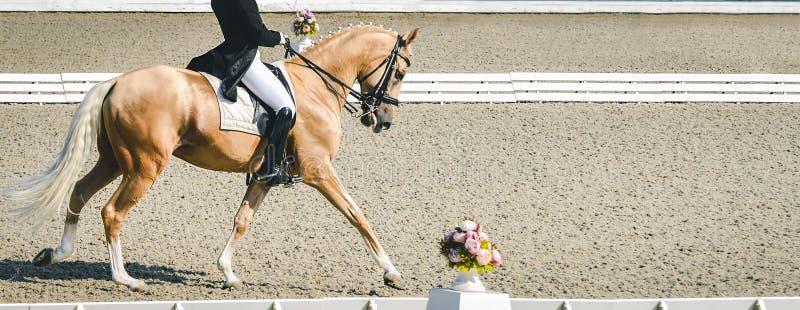 Donna del cavaliere e cavallo eleganti dell'acetosa Bella ragazza alla prova avanzata di dressage su concorrenza equestre fotografia stock libera da diritti