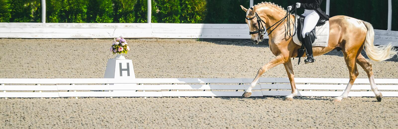 Donna del cavaliere e cavallo eleganti dell'acetosa Bella ragazza alla prova avanzata di dressage su concorrenza equestre immagini stock libere da diritti