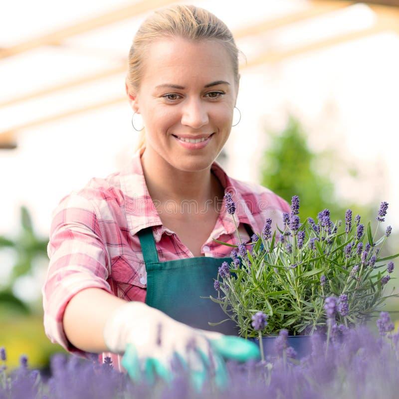 Donna del Garden Center con i fiori conservati in vaso della lavanda immagini stock libere da diritti