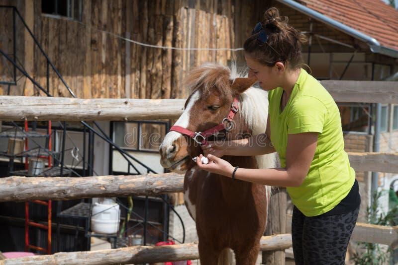 Donna del veterinario all'azienda agricola fotografie stock libere da diritti