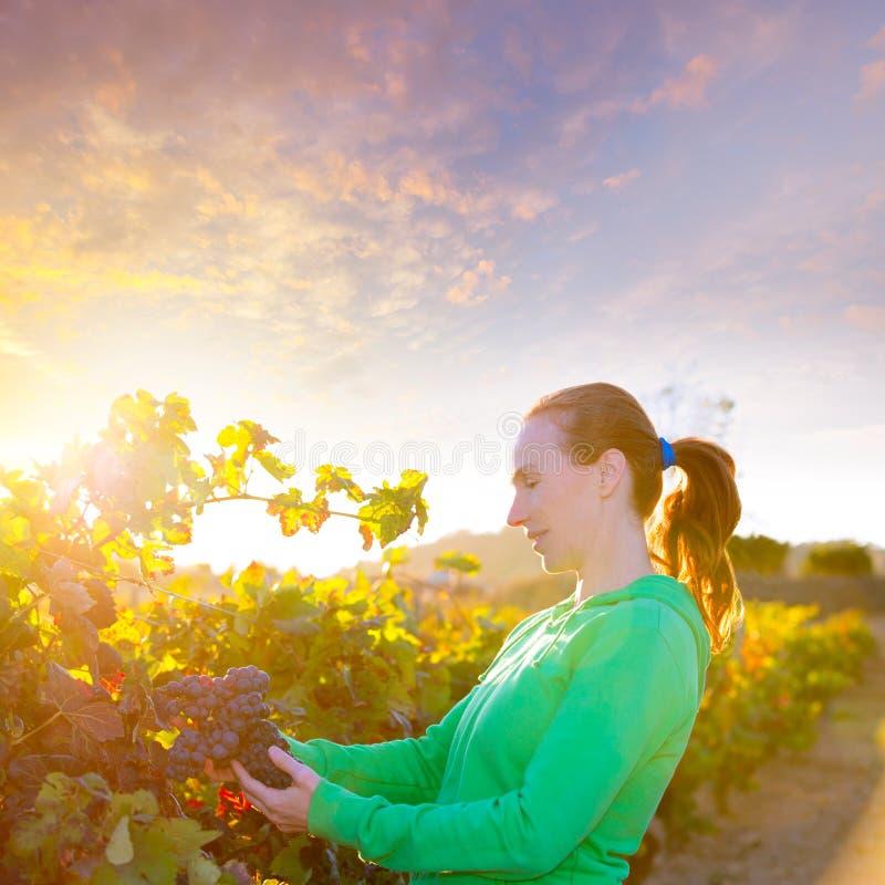 Donna dell'agricoltore in foglie di autunno del raccolto della vigna nel Mediterraneo fotografia stock libera da diritti