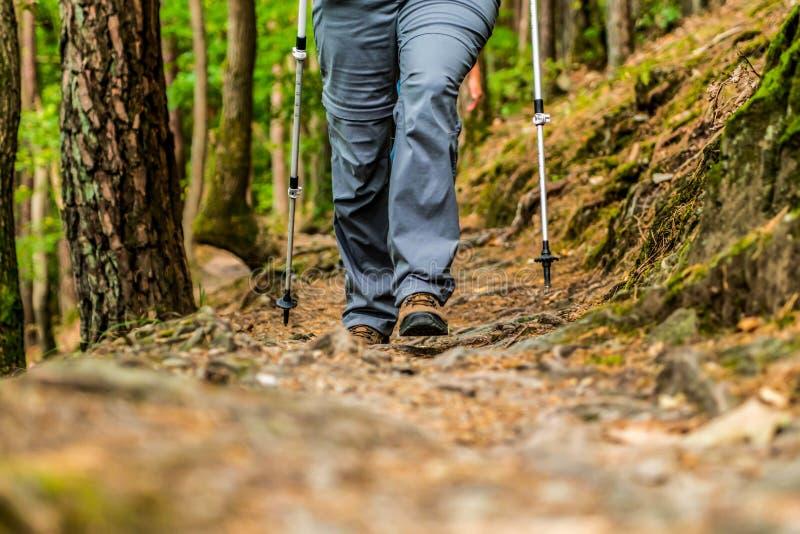 Donna della ragazza che fa un'escursione gli schoes e vista del dettaglio dei bastoni nell'attività all'aperto della foresta in n immagini stock