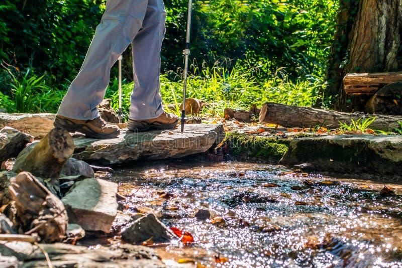 Donna della ragazza che fa un'escursione gli schoes e vista del dettaglio dei bastoni nell'attività all'aperto della foresta in n fotografia stock