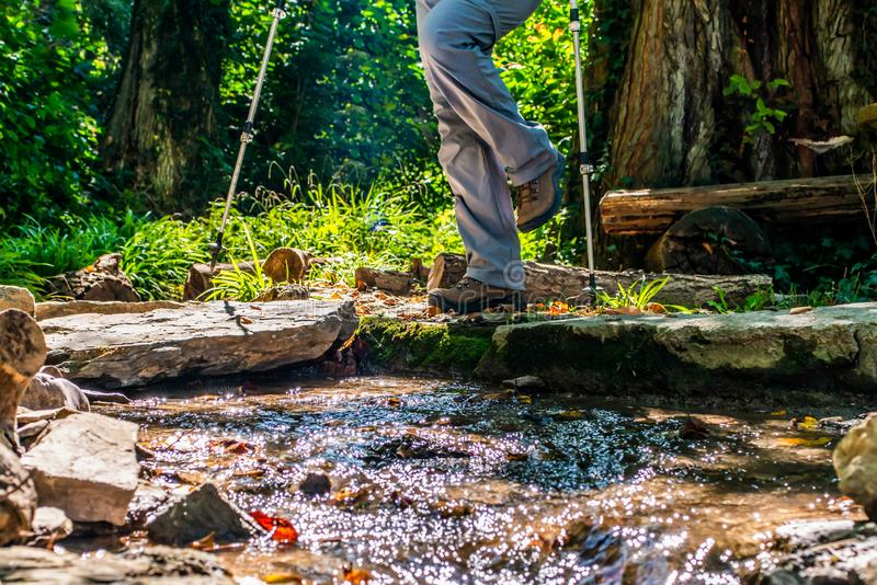 Donna della ragazza che fa un'escursione gli schoes e vista del dettaglio dei bastoni nell'attività all'aperto della foresta in n immagine stock libera da diritti