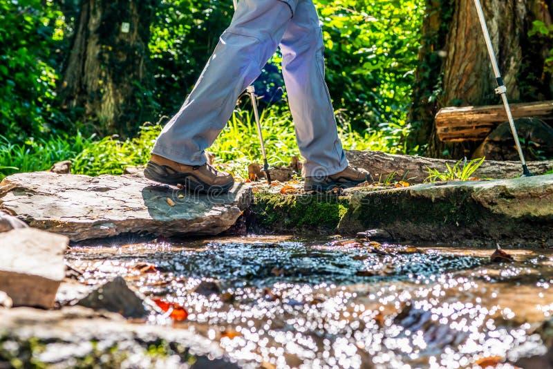 Donna della ragazza che fa un'escursione gli schoes e vista del dettaglio dei bastoni nell'attività all'aperto della foresta in n fotografie stock