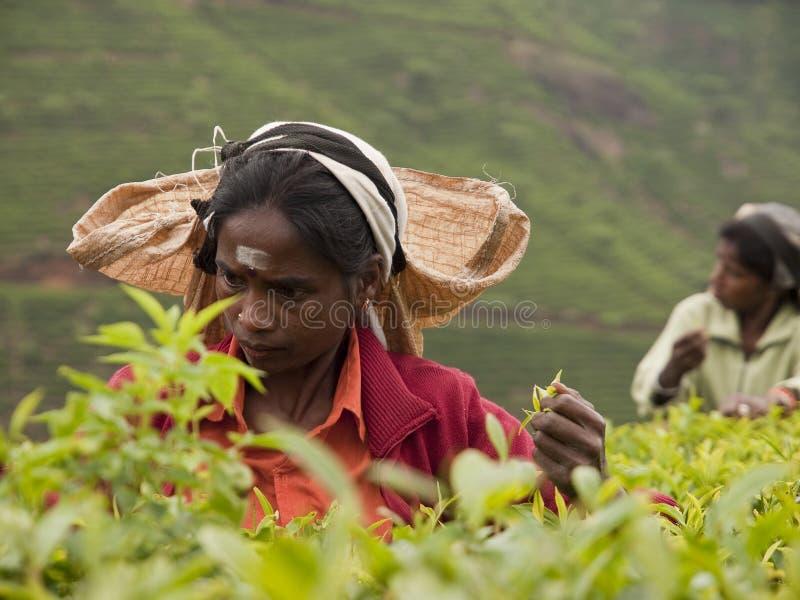 Donna della Sri Lanka fotografia stock