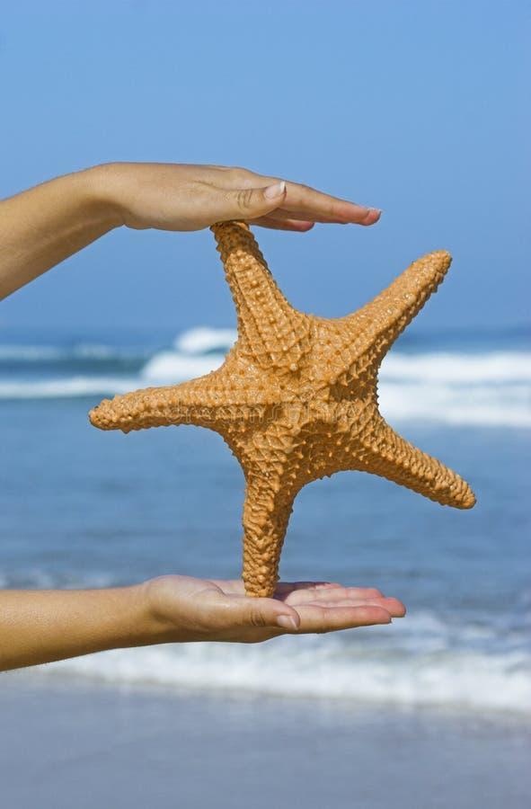 Donna delle stelle marine fotografia stock