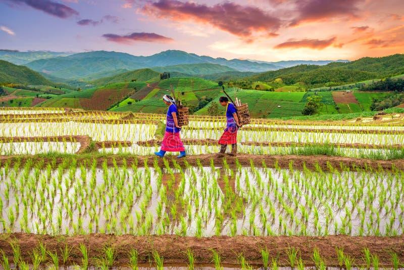 Donna di Hmong con il fondo del terrazzo del giacimento del riso fotografia stock libera da diritti