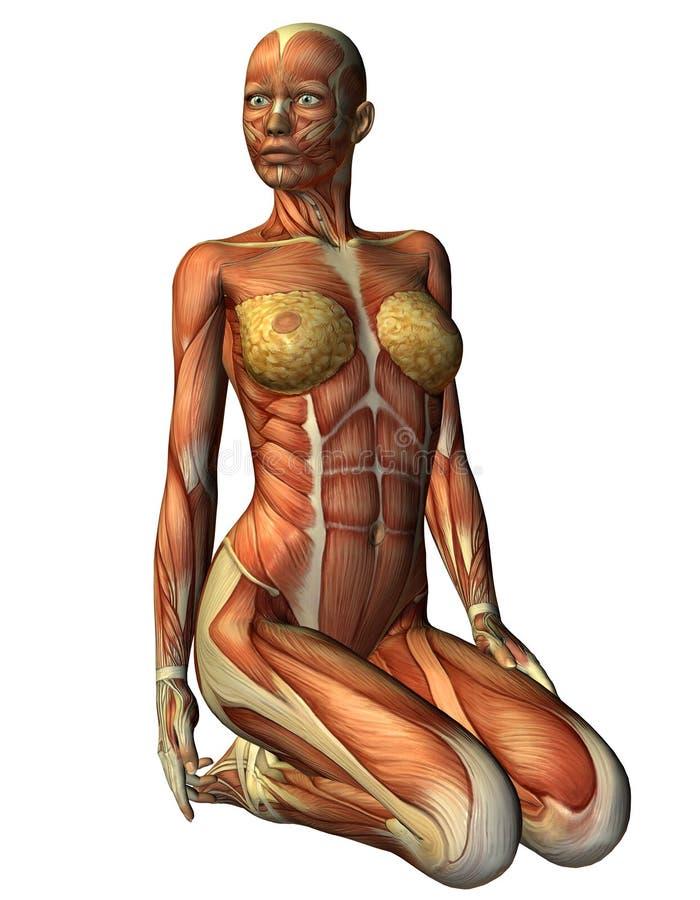 Donna di Muskelln sulle sue ginocchia dalla parte anteriore illustrazione di stock