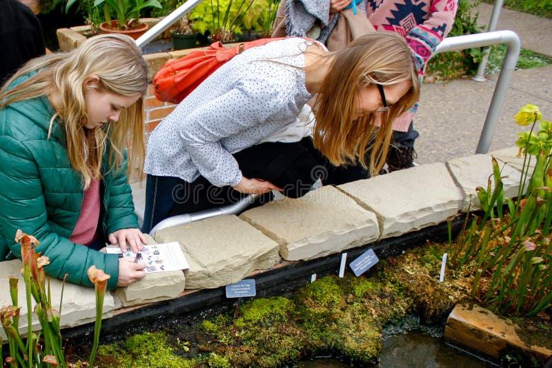 Donna e ragazza teenager che esplorano lo stagno del giardino botanico fotografia stock