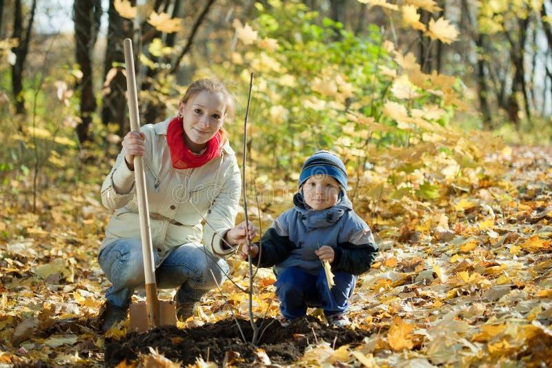 Donna e ragazzo che piantano albero in autunno immagine stock libera da diritti