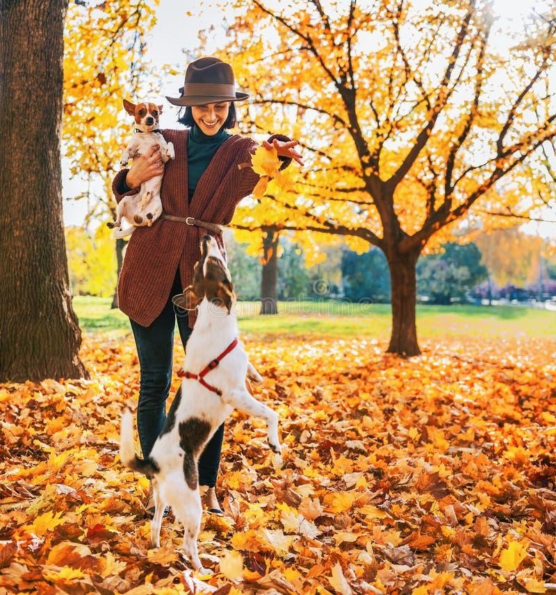 Donna felice che gioca con i cani all'aperto in autunno fotografia stock