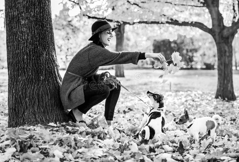 Donna felice che gioca con i cani all'aperto in autunno immagine stock libera da diritti