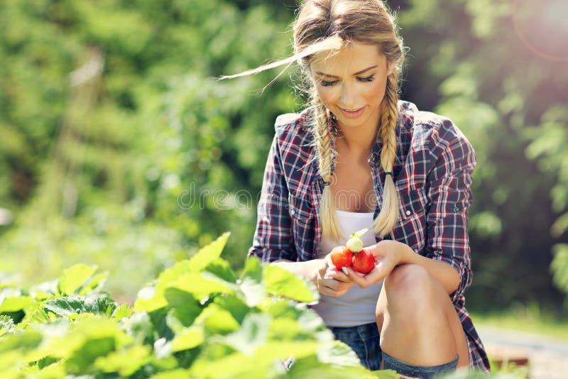 Donna felice che raccoglie le fragole fresche nel giardino fotografie stock