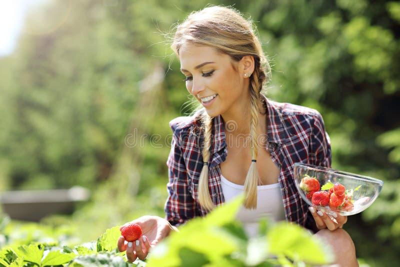 Donna felice che raccoglie le fragole fresche nel giardino immagini stock libere da diritti