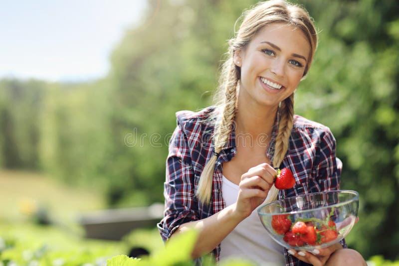 Donna felice che raccoglie le fragole fresche nel giardino fotografia stock