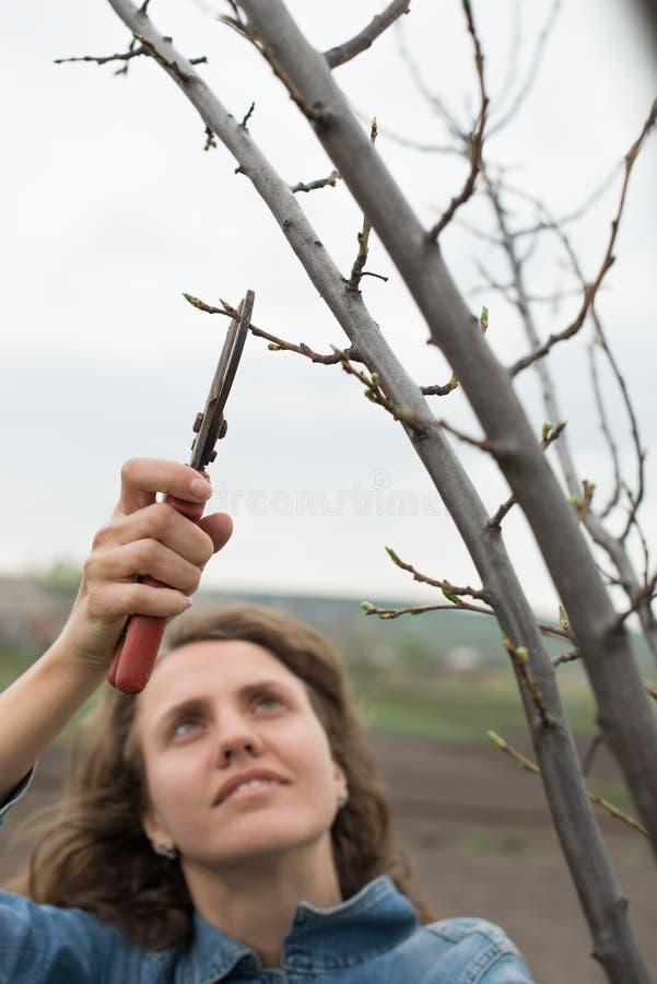 Donna felice del giardiniere che utilizza le forbici della potatura nel giardino del frutteto. Ritratto grazioso della lavoratrice fotografia stock libera da diritti