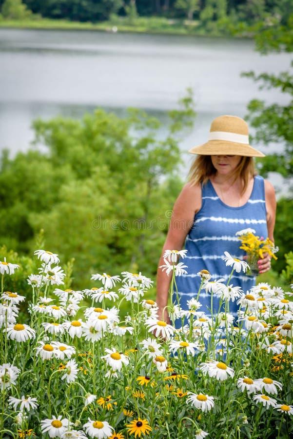 Donna in fiori di raccolto di cappellino da sole lungo il fronte lago fotografie stock