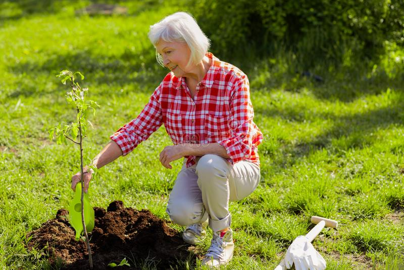 donna Grigio-dai capelli che innaffia poco albero nel suo giardino fotografia stock libera da diritti