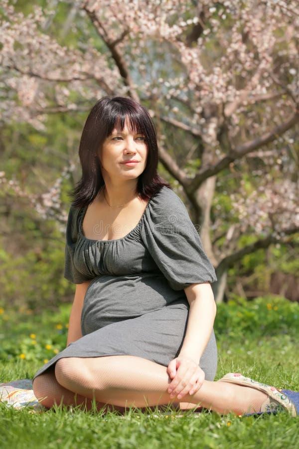 Donna incinta sotto di melo del fiore immagini stock