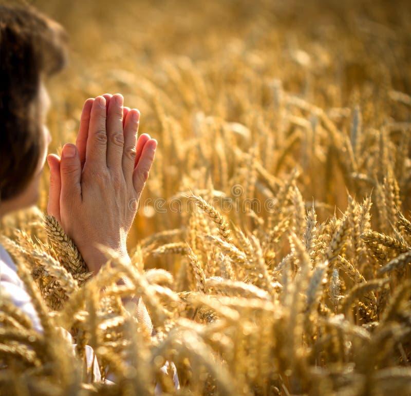 Donna nel campo di frumento - preghiera fotografia stock