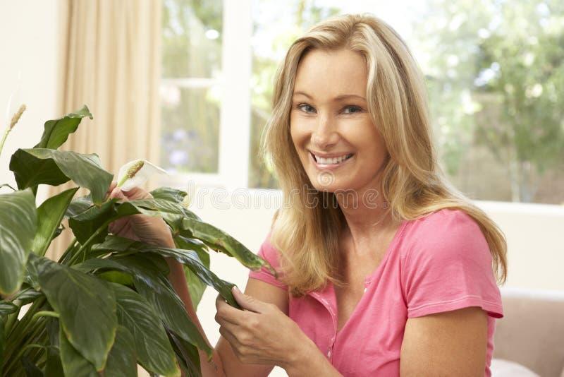 Donna nel paese che si occupa del Houseplant fotografie stock