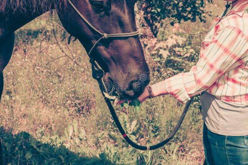 Donna occidentale che prende cura del cavallo sul prato fotografie stock