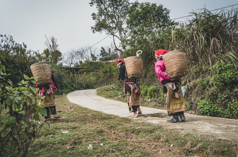 Donna rossa di minoranza etnica di dzao nel villaggio di Phin di tum, PA del Sa, provincia di Lao Cai, Vietnam fotografia stock libera da diritti